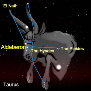 The Stars of Taurus